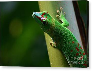 Gecko Canvas Print by Karin Brockmueller