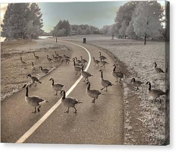 Geese Crossing Canvas Print by Jane Linders