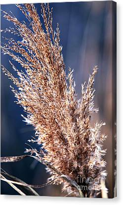 Gentle Nature Canvas Print by John Rizzuto