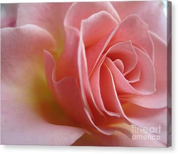 Gentle Pink Rose Canvas Print by Tara  Shalton
