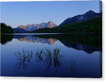 Gentle Spring Canvas Print by Chad Dutson