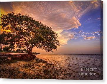 Gentle Whisper Canvas Print by Marvin Spates