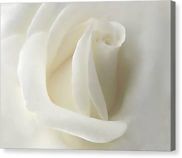 Gentle White Rose Flower Canvas Print by Jennie Marie Schell