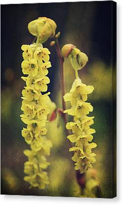 Gently Falling Canvas Print by Laurie Search
