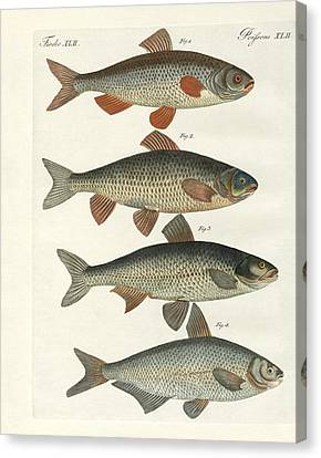 German River Fish Canvas Print by Splendid Art Prints