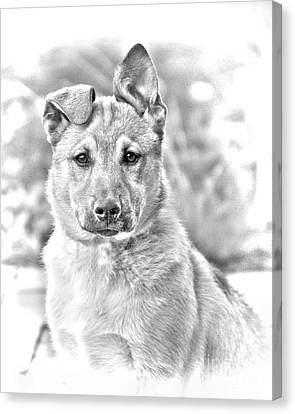 German Shepard Puppy Canvas Print by James BO  Insogna