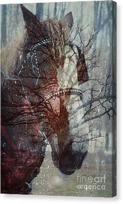 Ghost Horse Canvas Print by Nancy TeWinkel Lauren