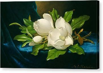 Giant Magnolias On A Blue Velvet Cloth Canvas Print by Martin Johnson Heade