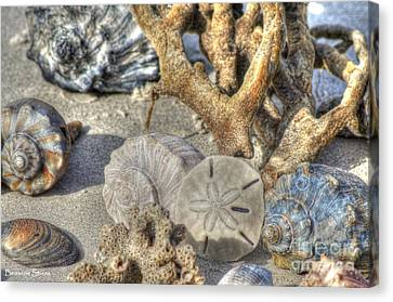 Gifts From The Sea Canvas Print by Benanne Stiens