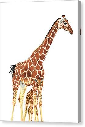 Giraffe Art - A Mother's Love - By Sharon Cummings Canvas Print by Sharon Cummings