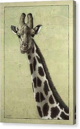 Giraffe Canvas Print by James W Johnson