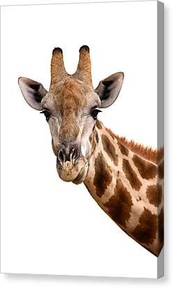 Giraffe Portrait Canvas Print by Johan Swanepoel