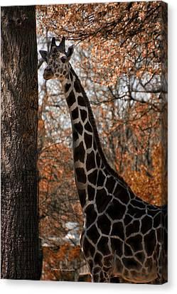 Giraffe Posing Canvas Print by Thomas Woolworth