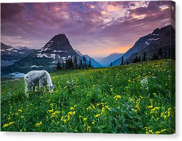 Glacier National Park 4 Canvas Print by Larry Marshall