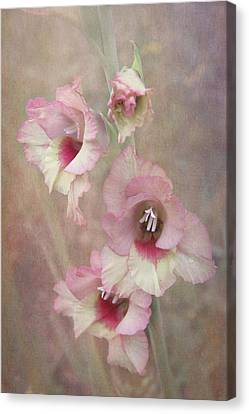 Gladiola Canvas Print by Angie Vogel