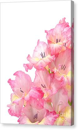 Gladiolus Canvas Print by Olivier Le Queinec