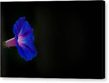 Glorious Simplicity Canvas Print by Cheryl Baxter