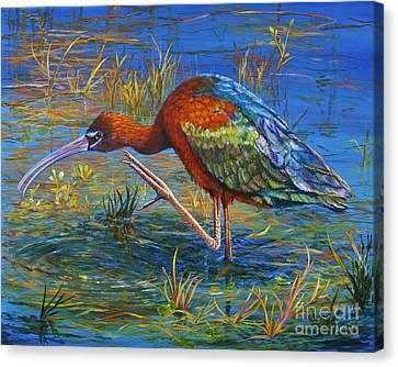 Glossy Ibis Canvas Print by AnnaJo Vahle