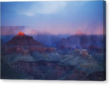 Glow Tops Canvas Print by Peter Coskun