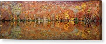 Glowing Autumn Canvas Print by Sho Shibata