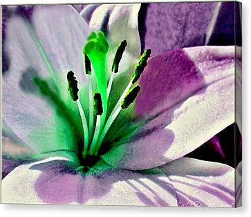 Glowing Lily Heart  Canvas Print by Danielle  Parent