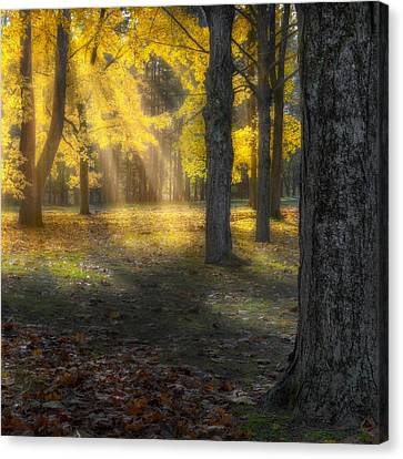 Glowing Maples Square Canvas Print by Bill Wakeley