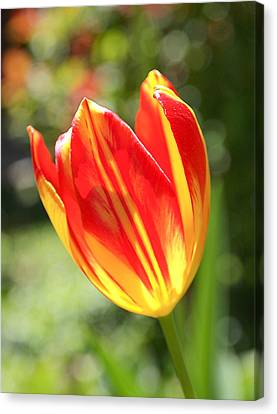 Glowing Tulip Canvas Print by Rona Black