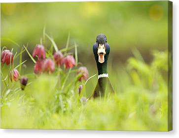 Go Home Duck You're Drunk Canvas Print by Roeselien Raimond