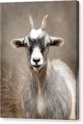 Goat Portrait Canvas Print by Lori Deiter