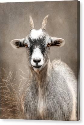 Goat Portrait Canvas Print by Lori Deiter