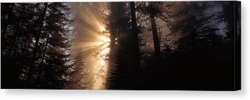 God Rays, Redwoods National Park, Ca Canvas Print by Panoramic Images