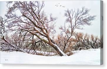 Going Softly Into Winter Canvas Print by Betty LaRue