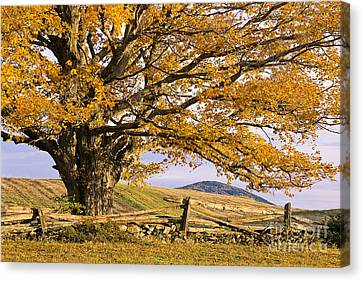 Golden Autumn Canvas Print by Alan L Graham