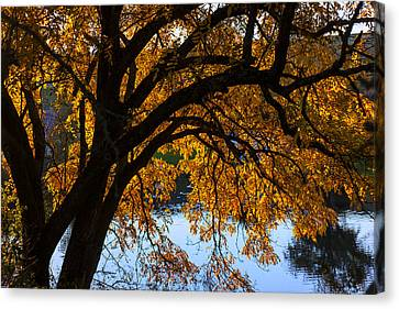 Golden Autumn Leaves Canvas Print by Garry Gay