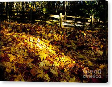 Golden Autumn Leaves Canvas Print by Graham Foulkes