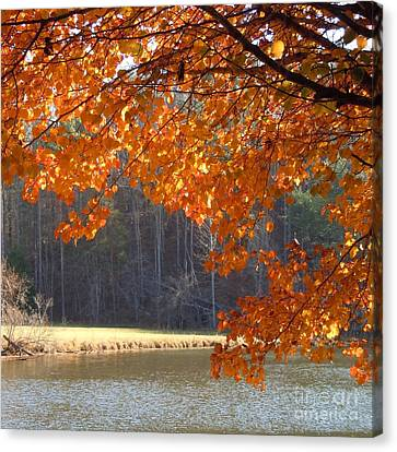 Golden Canopy Canvas Print by Pauline Ross