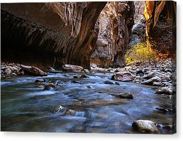 Golden Cottonwoods In The Narrows Canvas Print by Andrew Soundarajan
