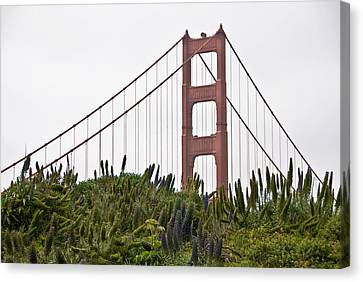 Golden Gate Bridge 1 Canvas Print by Shane Kelly