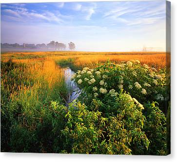 Golden Grassy Glow Canvas Print by Ray Mathis
