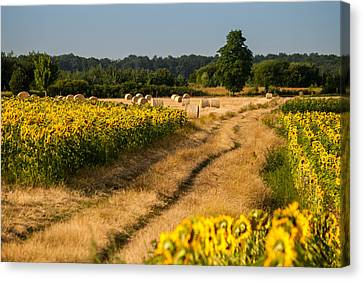 Golden Hour On Country Road Canvas Print by Davorin Mance