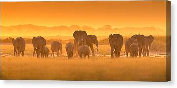 Golden Light Canvas Print by David Hua