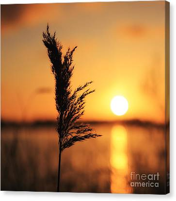 Golden Morning Canvas Print by LHJB Photography
