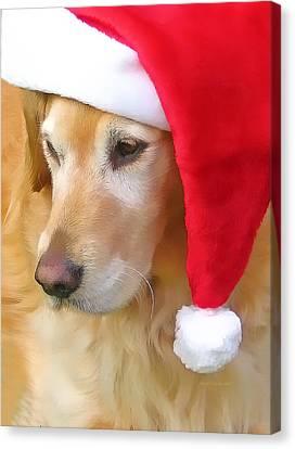Golden Retriever Dog In Santa Hat  Canvas Print by Jennie Marie Schell