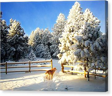 Golden Retriever Dog In Snow Canvas Print by Julie Magers Soulen