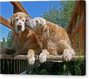 Golden Retriever Dogs The Kiss Canvas Print by Jennie Marie Schell
