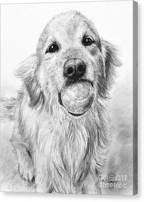Golden Retriever With Ball Canvas Print by Kate Sumners