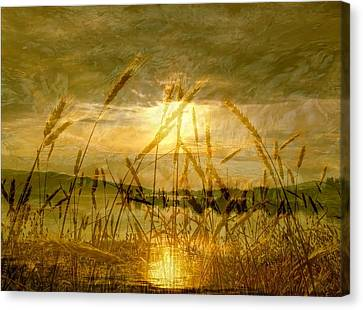 Golden Sunset Canvas Print by Barbara St Jean