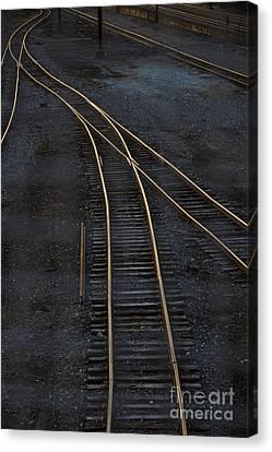 Golden Tracks Canvas Print by Margie Hurwich