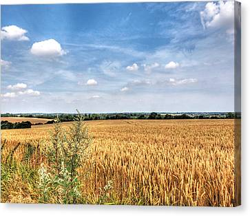 Golden Wheat Fields Canvas Print by Gill Billington