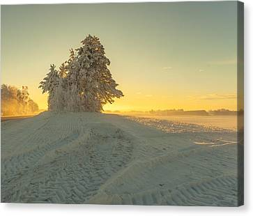Golden Winter Canvas Print by Rose-Maries Pictures